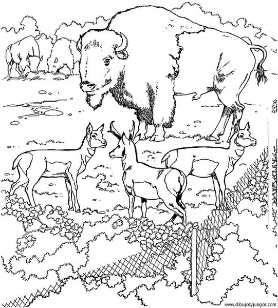 dibujo-de-bisonte-004 | Dibujos y juegos, para pintar y colorear