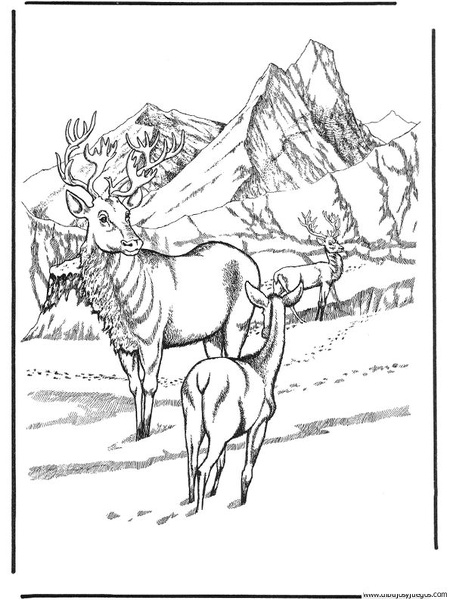 dibujo de ciervo 10 | Dibujos y juegos, para pintar y colorear