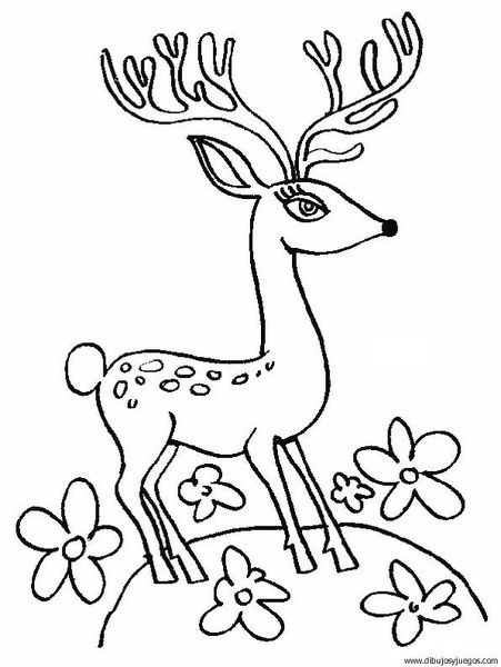 dibujo-de-ciervo-18 | Dibujos y juegos, para pintar y colorear