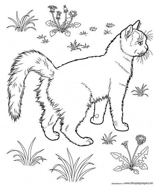 dibujo-de-gato-252 | Dibujos y juegos, para pintar y colorear