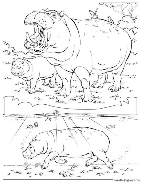 dibujo-de-hipopotamo-019 | Dibujos y juegos, para pintar y colorear