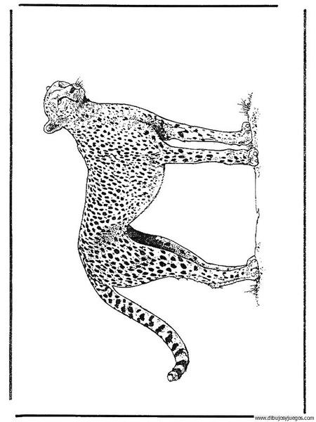 dibujo-de-leopardo-003 | Dibujos y juegos, para pintar y colorear
