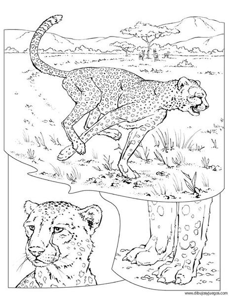 dibujo-de-leopardo-014 | Dibujos y juegos, para pintar y colorear