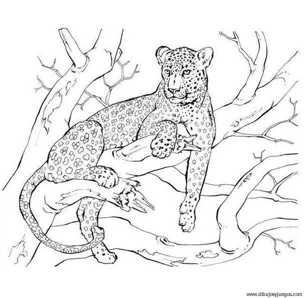 dibujo-de-leopardo-023 | Dibujos y juegos, para pintar y colorear