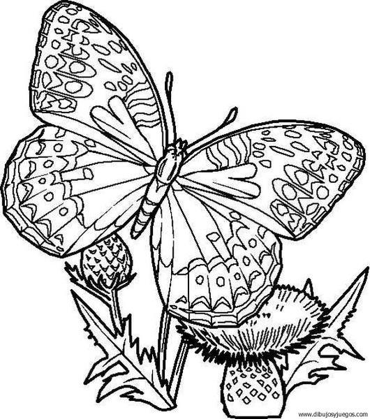 dibujo-de-mariposa-071  Dibujos y juegos, para pintar y ...