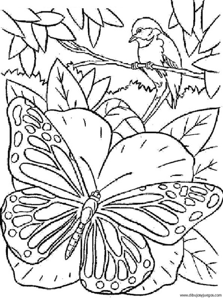 dibujo-de-mariposa-099 | Dibujos y juegos, para pintar y colorear
