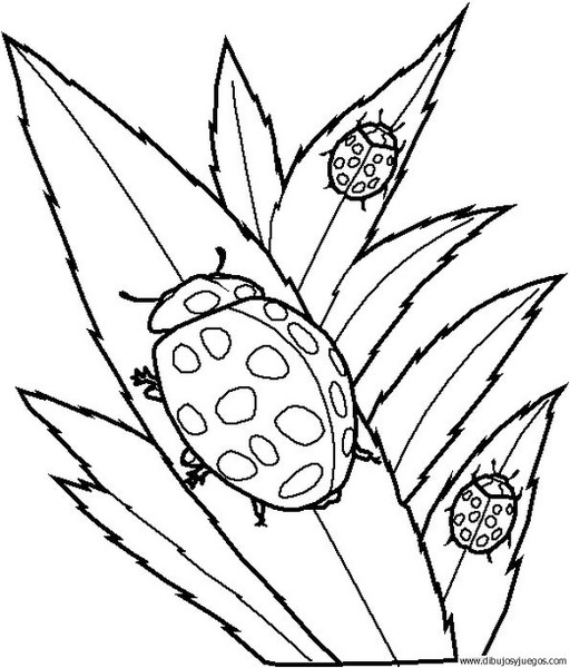dibujo-de-mariquita-014 | Dibujos y juegos, para pintar y colorear