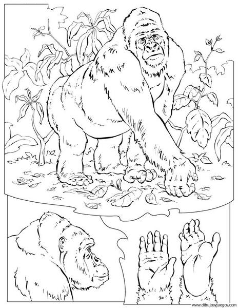 dibujo-de-gorila-005 | Dibujos y juegos, para pintar y colorear