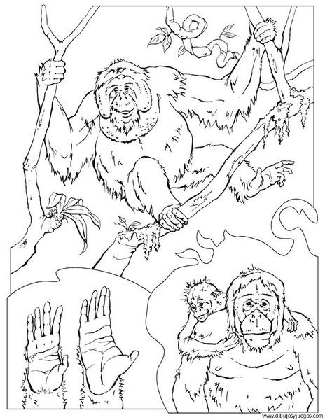 dibujo-de-mono-057 | Dibujos y juegos, para pintar y colorear