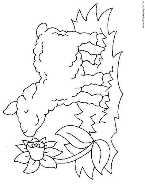 borego Colouring Pages (page 2)
