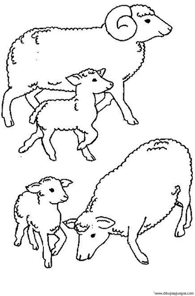 dibujo-de-oveja-010 | Dibujos y juegos, para pintar y colorear
