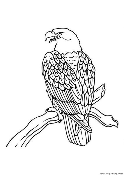 dibujo-de-aguila-001 | Dibujos y juegos, para pintar y colorear