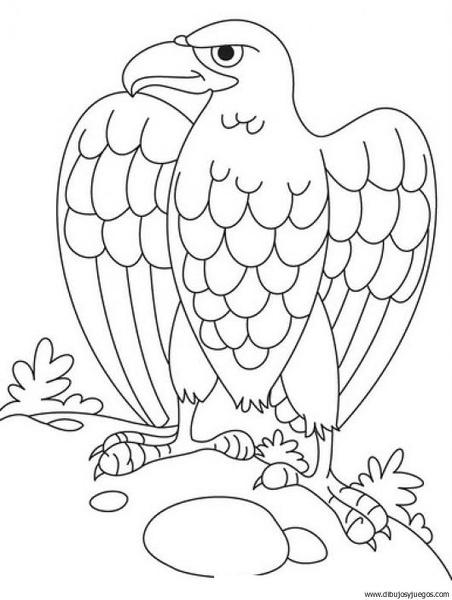 Dibujos de aguila real para colorear - Imagui