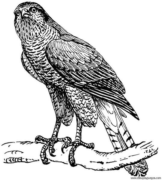 Dibujo De Aguila 020 Dibujos Y Juegos Para Pintar Y Colorear