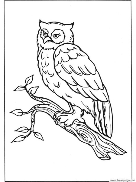 dibujo-de-buho-018 | Dibujos y juegos, para pintar y colorear