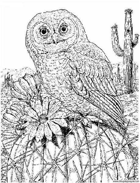 Dibujo De Buho 021 Dibujos Y Juegos Para Pintar Y Colorear