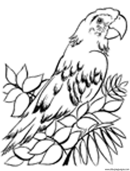 dibujo-de-loro-049 | Dibujos y juegos, para pintar y colorear