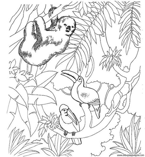 Dibujo De Tucan 003 Dibujos Y Juegos Para Pintar Y Colorear