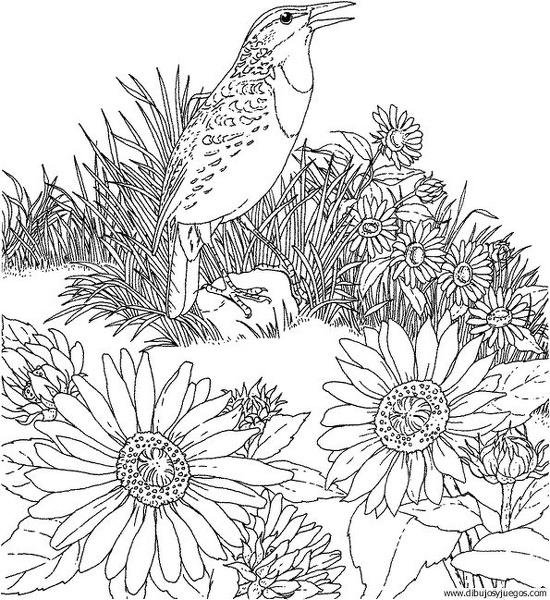 dibujo-de-pajaro-140 | Dibujos y juegos, para pintar y colorear