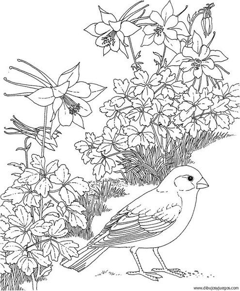 dibujo-de-pajaro-150 | Dibujos y juegos, para pintar y colorear