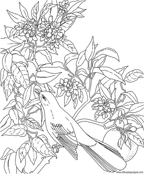 dibujo-de-pajaro-151 | Dibujos y juegos, para pintar y colorear