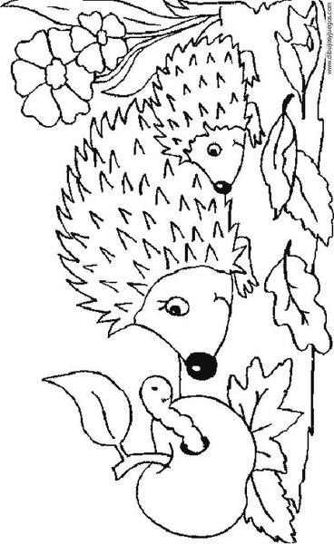 dibujo-de-puercoespin-erizo-002 | Dibujos y juegos, para pintar y ...