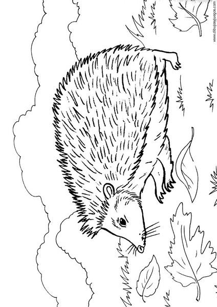dibujo-de-puercoespin-erizo-029 | Dibujos y juegos, para pintar y ...
