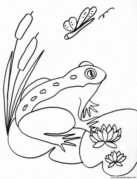 dibujo-de-rana-049 | Dibujos y juegos, para pintar y colorear