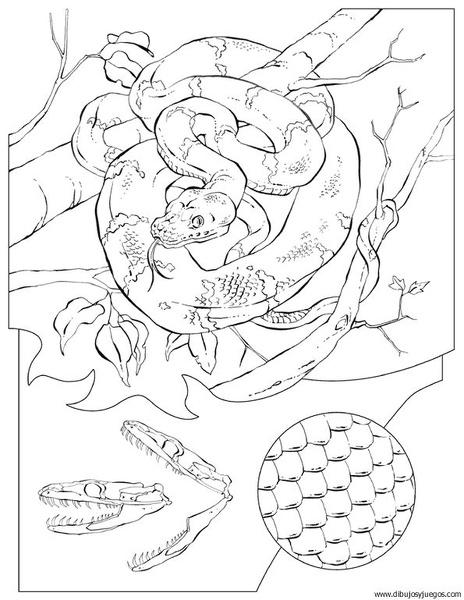 dibujo-de-serpiente-010 | Dibujos y juegos, para pintar y colorear