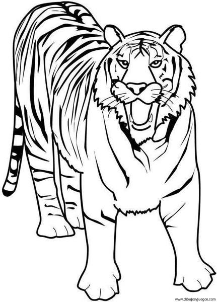 dibujo-de-tigre-006 | Dibujos y juegos, para pintar y colorear
