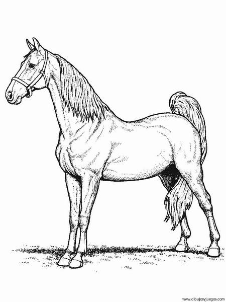dibujo-de-caballo-137 | Dibujos y juegos, para pintar y colorear