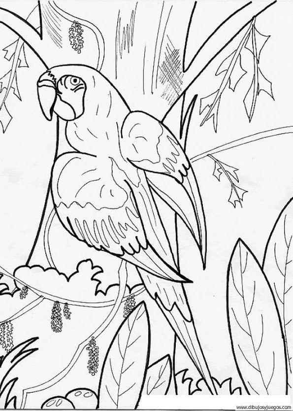 dibujo-de-loro-016 | Dibujos y juegos, para pintar y colorear