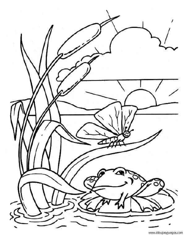 Plantas acuaticas para pintar - Imagui