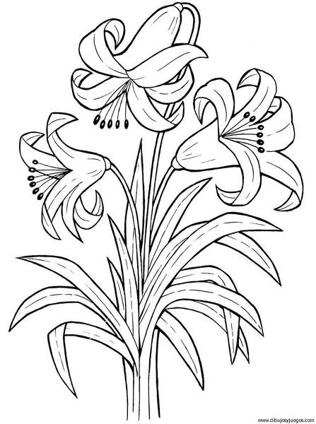 Dibujo Flores Lirios 009 Dibujos Y Juegos Para Pintar Y
